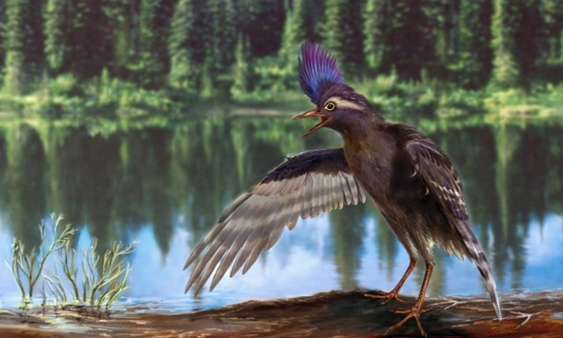 Scientists Discover The Oldest Ancestor of Nowadays Birds