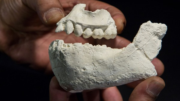 new human ancestor
