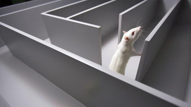 """rat running through maze"""