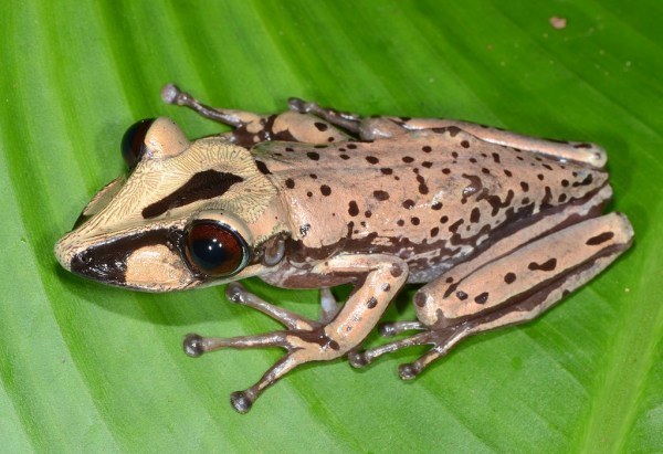 """""""venomous frogs discovered"""""""
