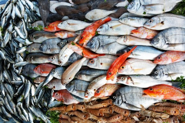 """""""25% of fish on markets are contaminated"""""""