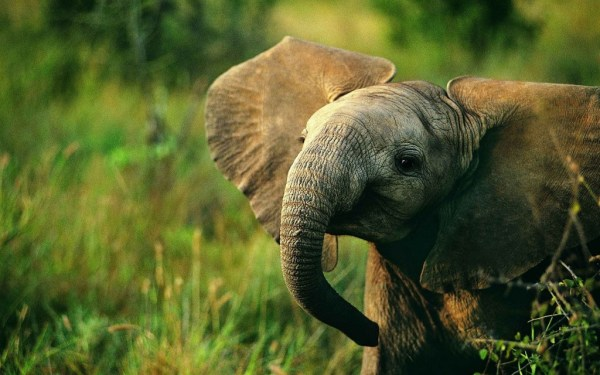 """elephants may aid treatments against cancer"""