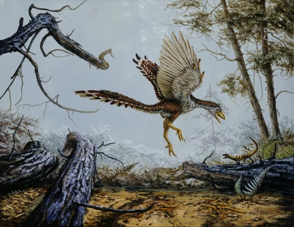 """fossilized wing reveals whether ancient birds could fly"""