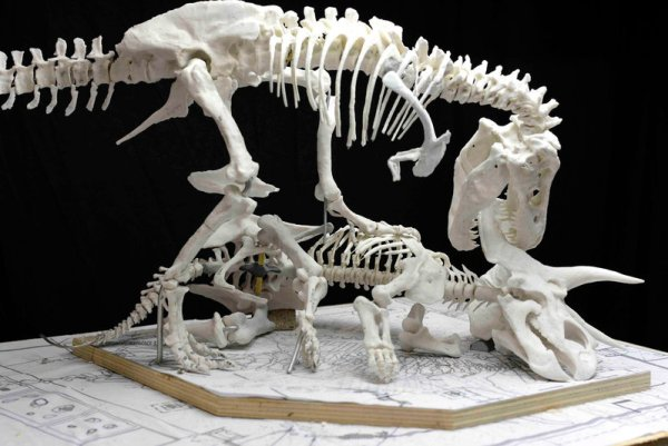 """""""t-rex display to come in 2019 to the smithsonian"""""""