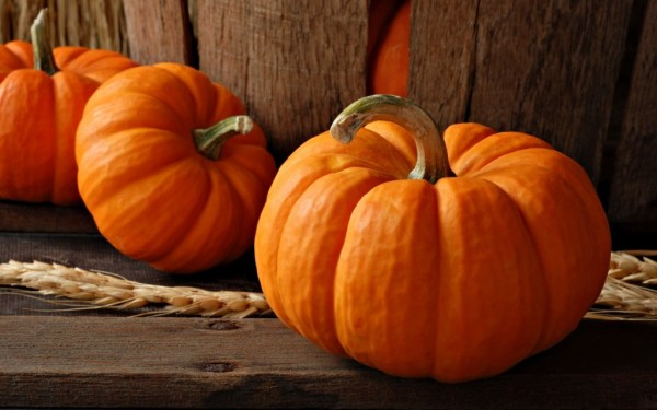 """""""pumpkins could have disappeared"""""""