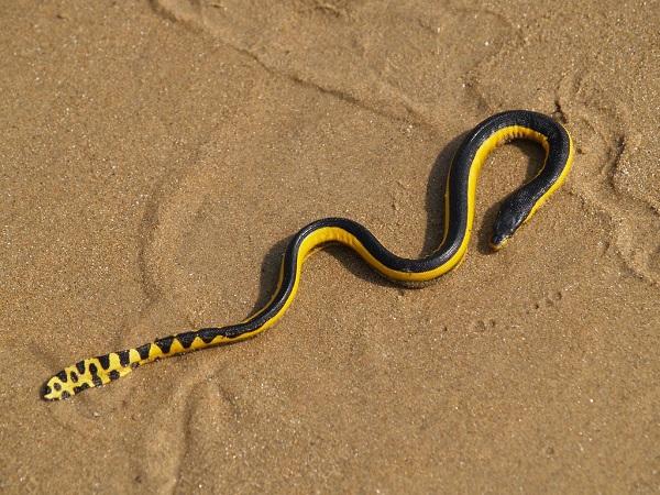 """""""Venomous snake in California"""""""