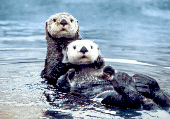 Officials doubled the reward for the sea otter killer