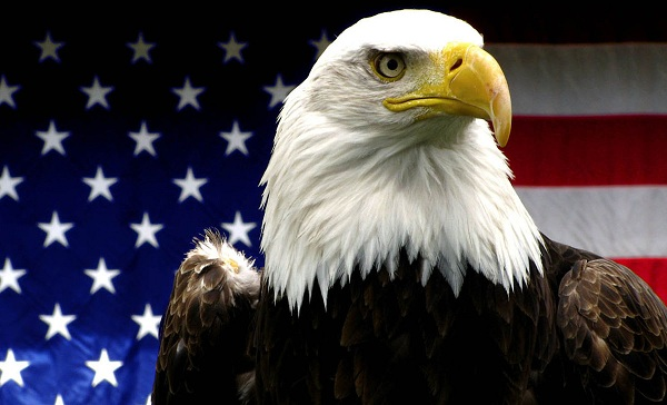 American bald eagle and the flag of the US