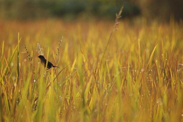 A bird in the grass