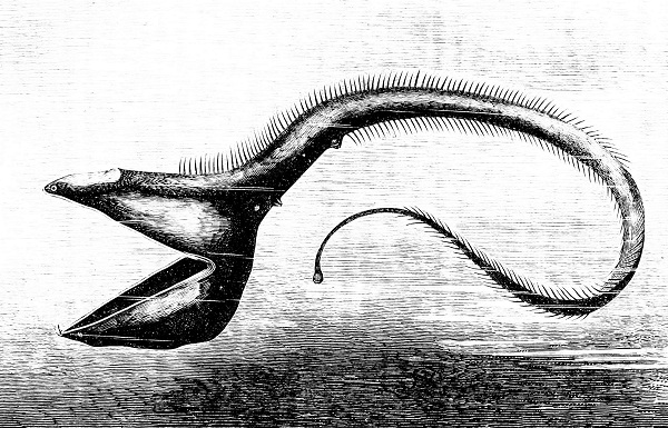 An illustration of an ancient worm