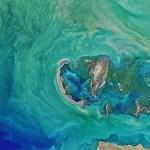 Phytoplankton Turned the Black Sea Turquoise