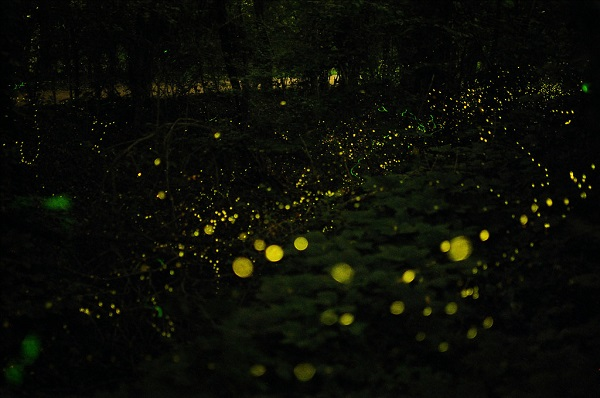 MIT Engineers Have Developed Plants That Glow In the Dark