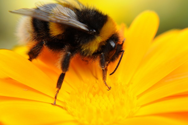 Woman dies after 'live bee acupuncture' treatment
