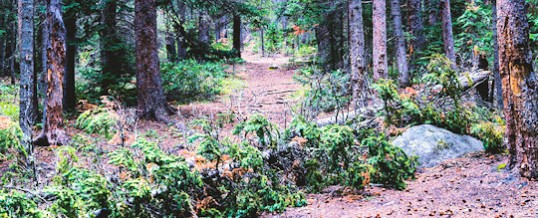 If an Advocate Launches in the Forest, and No One Hears….