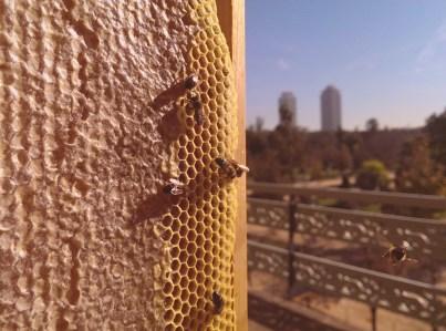 apicultura4