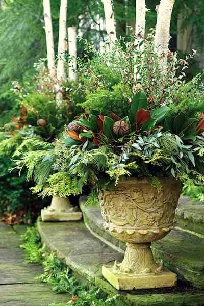 24 Colorful Winter Planters   Christmas Outdoor Decorations   A     Best plants and cuttings for winter planters and Christmas outdoor  decorations
