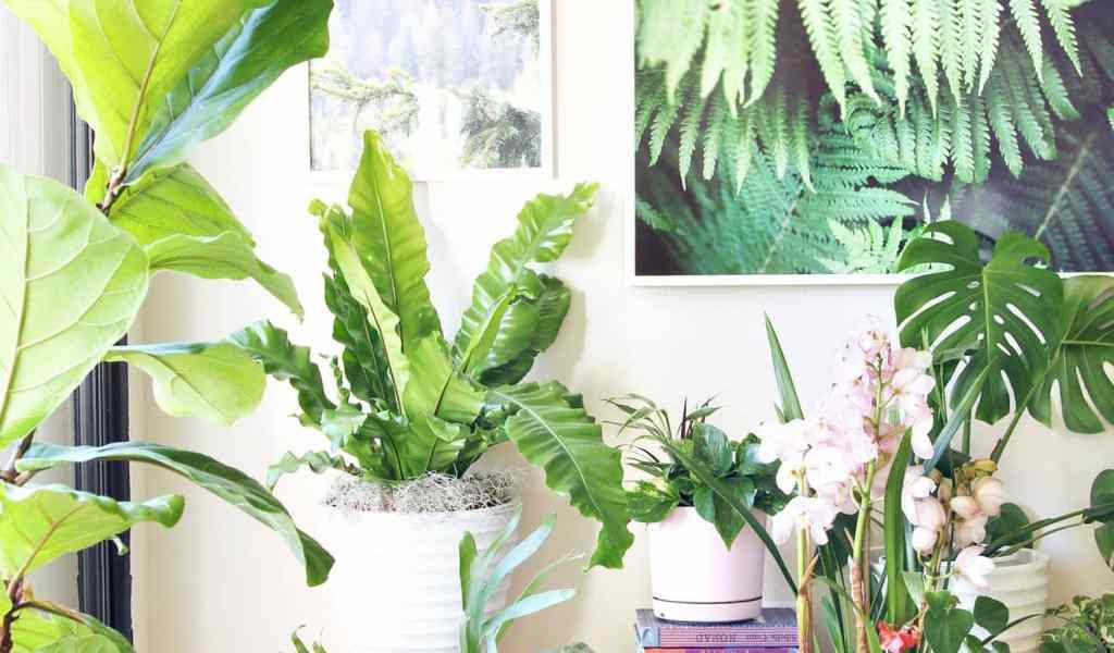 Best Indoor Plants - Home & Garden Improvement Design Collaboration
