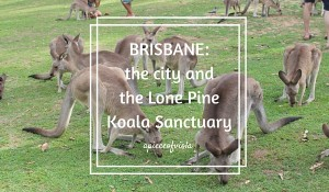 Brisbane: the city and the Lone Pine Koala Sanctuary