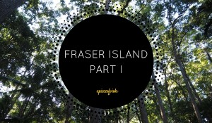 Fraser Island Part I | Cool Dingo Tours