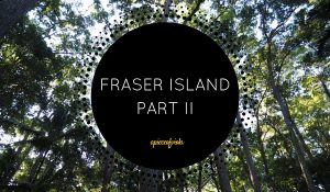 Fraser Island Part II | Cool Dingo Tours