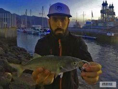 Pejerey-Rockfishing