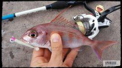 pluma-rockfishing