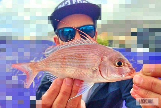 sama-pluma-rockfishing-sparidae