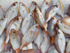 catch-fish-fish-market-freeze