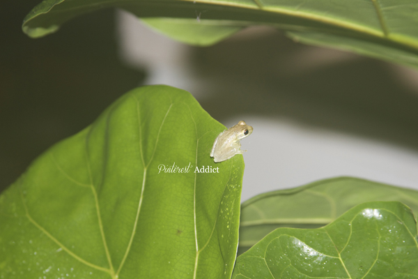 tree frog - So darn adorable, I almost wanted to keep him as a pet.