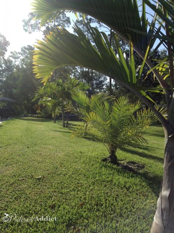 Pinterest Addict - palm trees