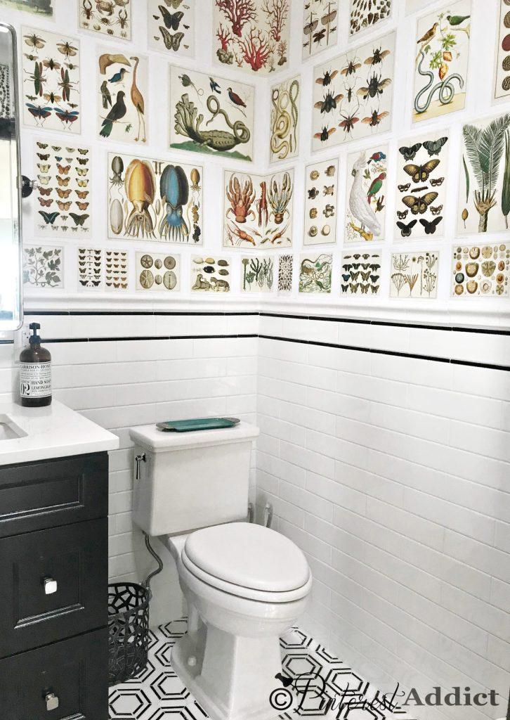 cabinet of natural curiosities powder room makeover