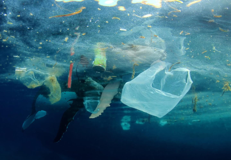 A Plastic Ocean Foundation