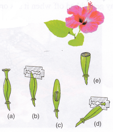 flowering-plant-reproduce