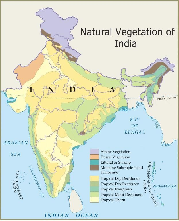 ICSE Solutions for Class 10 Geography - Natural Vegetation