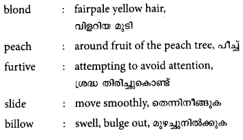 Plus One English Textbook Answers Unit 6 Chapter 3 Conceptual Fruit (Short Story) 3