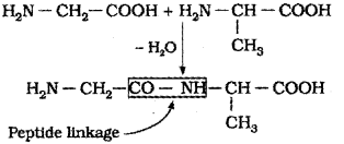 Plus Two Chemistry Chapter Wise Previous Questions Chapter 14 Biomolecules 9