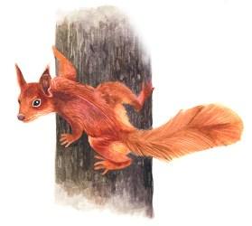 Entdecke dein Krafttier - Eichhörnchen