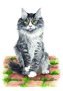 Entdecke dein Krafttier - Katze