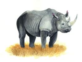 Entdecke dein Krafttier - Nashorn