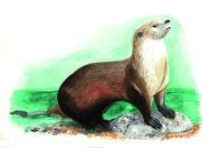 Entdecke dein Krafttier - Otter
