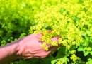 Buchtipp – spirituelle Pflanzenheilkunde – Heilkräuterwissen umfassend und ganzheitlich!