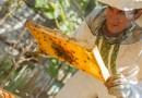 Apitherapie – Die Heilkräfte der Bienen