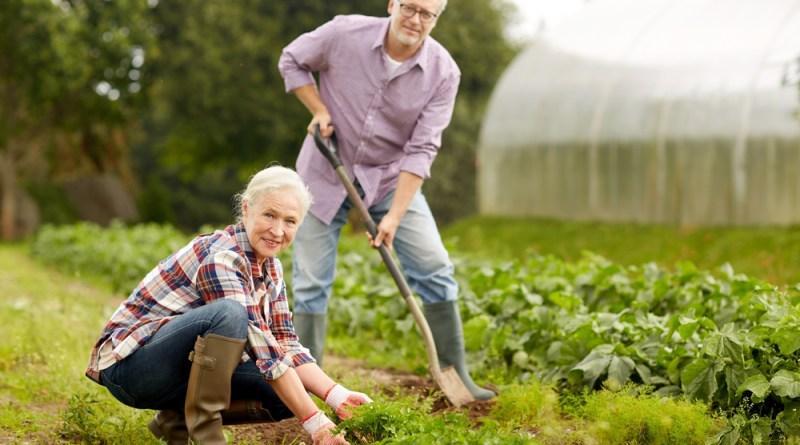 Freude-bei-der-Gartenarbeit-statt-Rückenschmerzen