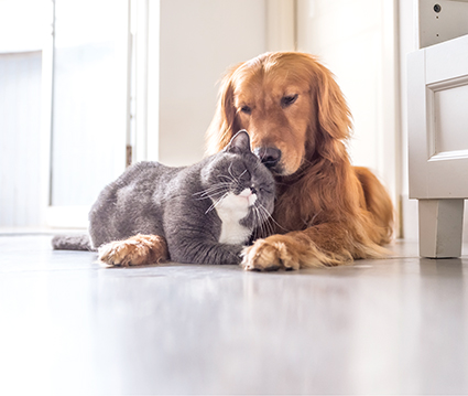 Hund und Katze kuscheln miteinander. Fellprobleme beim Tier