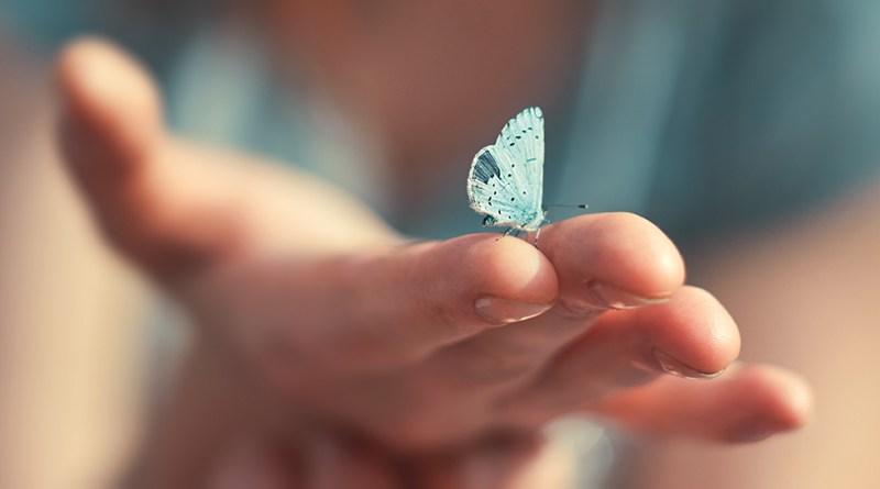 Frau streckt Hand aus. Schmetterling sitzt auf ihrem Finger. Sensibel. Handhygiene