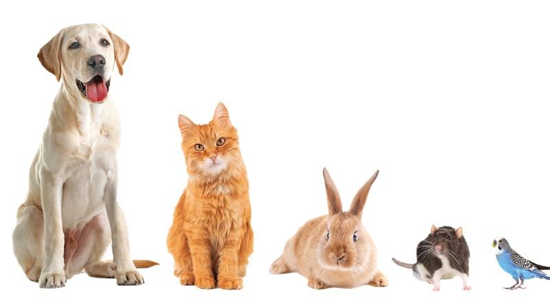 Tiere der Größe nach aufgereiht. Tiere sitzen vor weißem Hintergrund nebeneiander. Tiergesundheit. Hund, Katze, Hase, Maus, Vogel