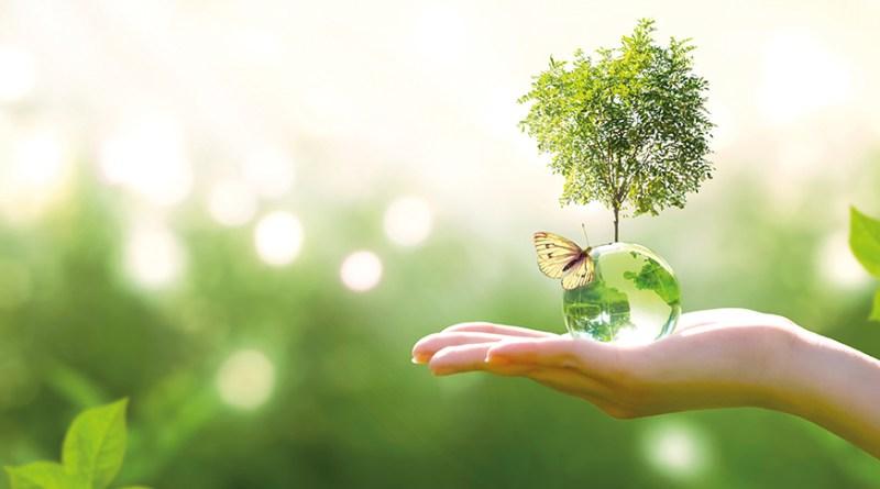 Natur. Kristallglasbal mit Schmetterling und Baum. grün. Naturkosmetik