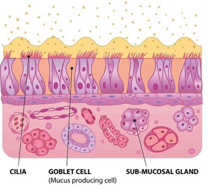 Illustration einer Nasenschleimhaut. gereizte Nasenschleimhaut durch Pollen. Allergie