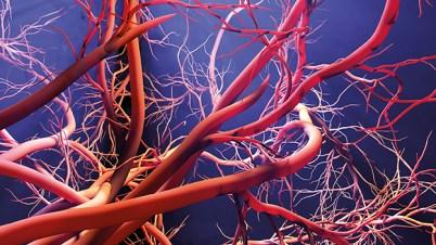 scharf sehen. Durchblutung. Artieren und Venen