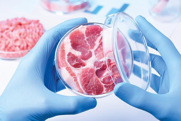 Fleisch in Petrischale im Labor. Künstlich hergestelltes Fleisch. Clean Meat